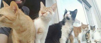 تصاویر) + تصویر العمل دیدنی گربههای مصدوم به کیبوردنوازی مرد جوان (